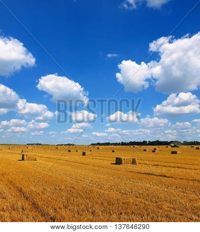 field at after harvest agricultural concept