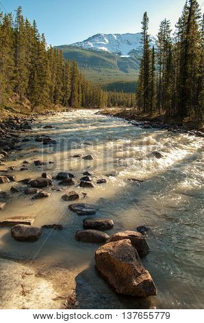 View along the riverbank of the Sunwapta River in Jasper National Park.