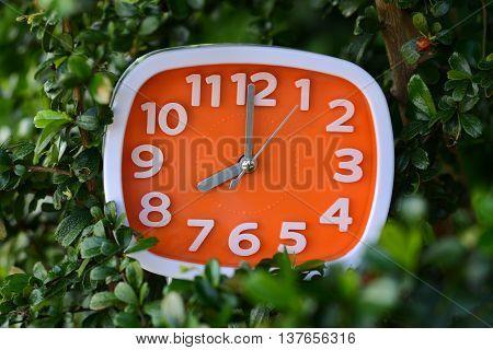 Orange clock 8.00 o'clock in green leaves