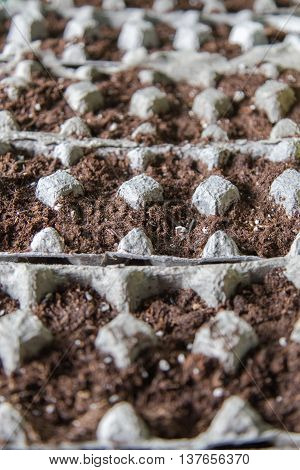 Egg cartons with soil and seeds planted in them.