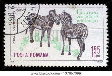 ZAGREB, CROATIA - JULY 18: A stamp printed by Romania, shows zebra, circa 1964, on July 18, 2012, Zagreb, Croatia