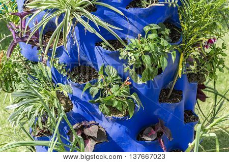 Growing plants in plastic container and maintaining.