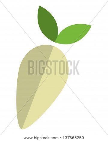 simple flat design whole turnip icon vector illustration