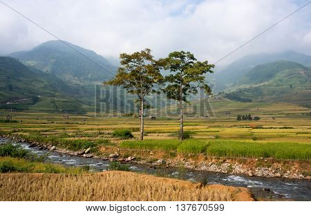 YEN BAI, VIETNAM, June 13, 2016 golden rice fields, high mountains Tu Le, Yen Bai Province, Vietnam