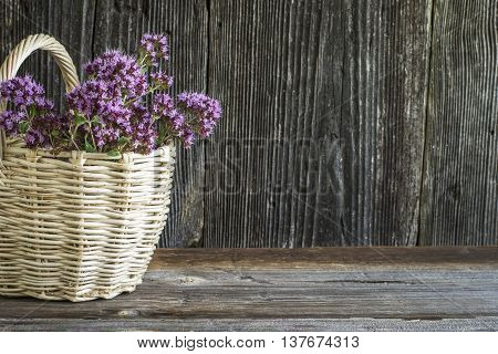 Light wicker basket with a bouquet of blossoming oregano on a dark wooden background. selective focus