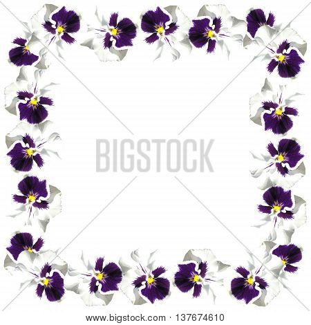 Beautiful floral pattern of isolated colors blue and white viola