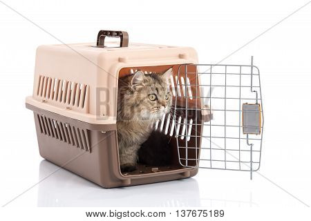 Tabby cat with pet carrier isolated on white background