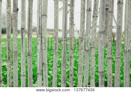 Bamboo background, Bamboo fence, Texture & background
