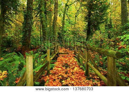 a picture of an exterior Pacific Northwest forest wood bridge in fall