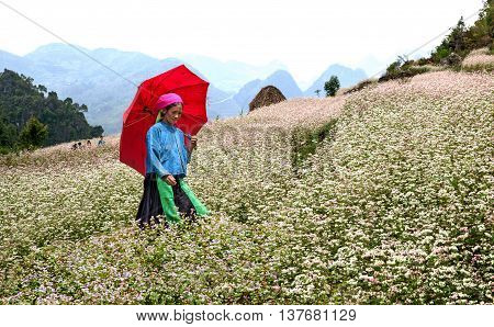 HA GIANG, VIET NAM, September 24, 2015 woman, Hmong, high mountains, Ha Giang, Vietnam. promenade gardens triangle circuit