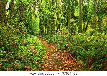a picture of an exterior Pacific Northwest hiking trail in fall
