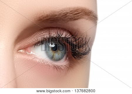 Macro Shot Of Woman's Beautiful Eye With Extremely Long Eyelashe