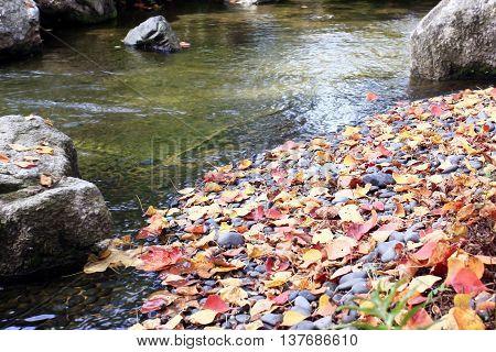 Fallen leaves over black rock near canal