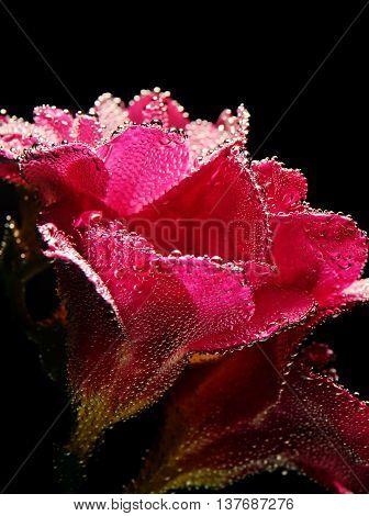 Photo Of Close-up Beautiful Underwater Red Freesia