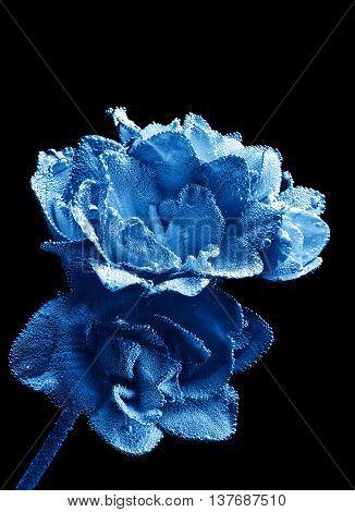 Photo Of Close-up Beautiful Underwater Blue Freesia