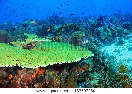 The Pristine and Colorful Coral Reefs of Komodo Indonesia