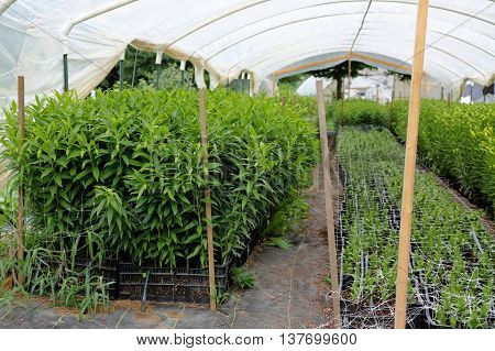 Plants growing in a green house at an organic flower farm in the united states