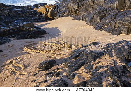 Washed in beach sand surrounded by black rock background on beach in South Africa