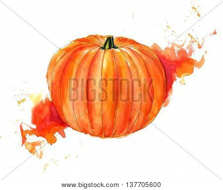 A watercolour drawing of a beautiful vibrant pumpkin on a bright texture hand painted on white background