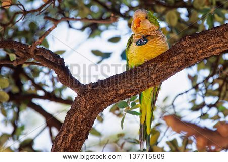 Parrot On The Tree In Ciutadella Park In Barcelona