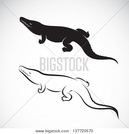 Vector of crocodile design on white background. Vector crocodile for your design.