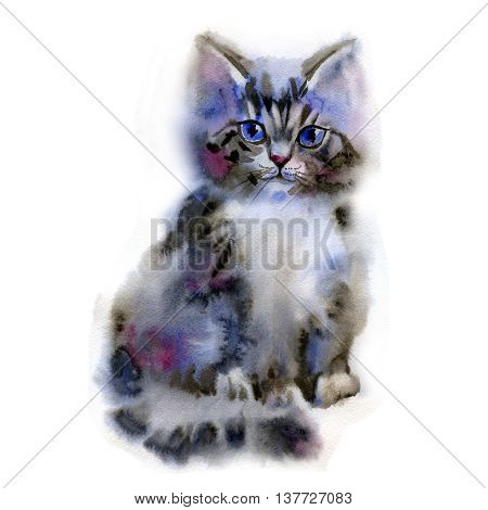 Watercolor funny little fluffy kitten isolated on white background