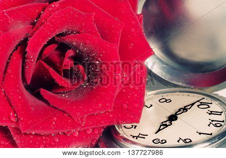 Beautiful red rose with drops of water and antique pocket watch (retro style)