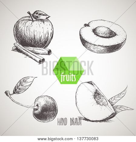 Hand drawn sketch style fruits set. Apple with cinnamon sticks half of apricot cherry and quarter of peach. Organic food farm fresh fruit. Vintage style illustration