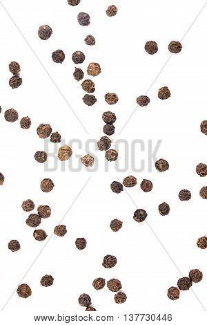 Black pepper isolated  grain, spice, white, peppercorn