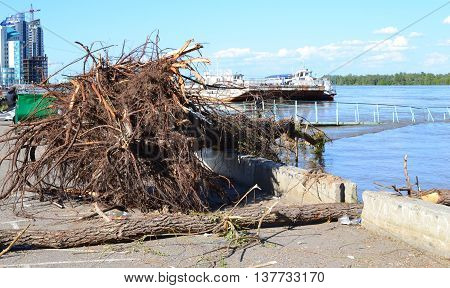 Tree root washed ashore in the flood period