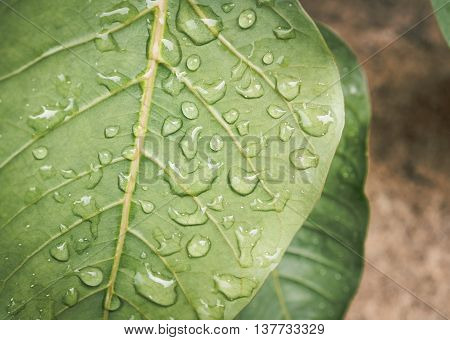 Raindrops on a green leaf. selective focus, Abstract concept