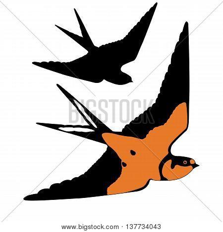 bird swallow realistic vector illustration black silhouette