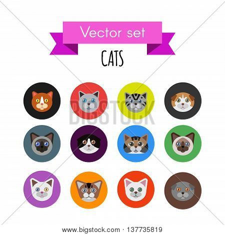 Set of cat icons. Various cats breed
