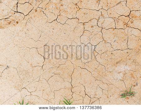 Plant surviving in dry and cracked ground