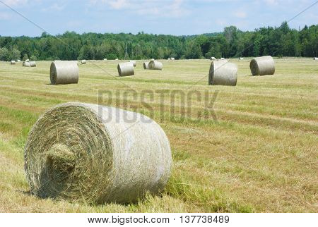hay bales in a grass gold field