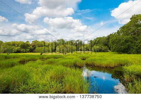 Florida wetland natural landscape. Forest, meadow and pond.