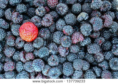 strawberry on the background of black raspberries