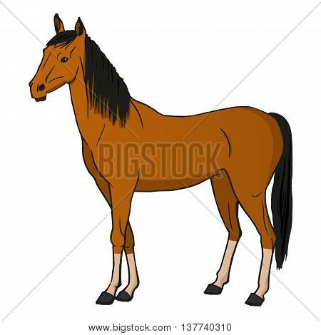 Vector illustration horse isolated on a white background.