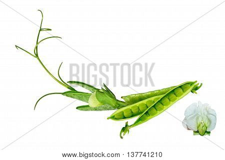 Green pea pod isolated on white background