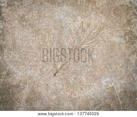 Leaf impression in stone