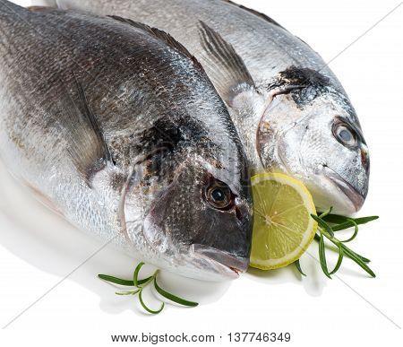 Two fresh dorada fishes with lemon isolated on white background.