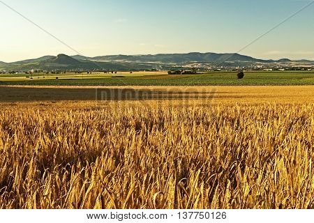 gold field in Ceske stredohori region with Litomerice city in background in czech landscape