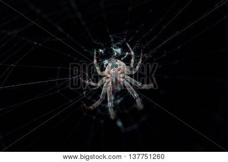 Spider in spider web against dark background