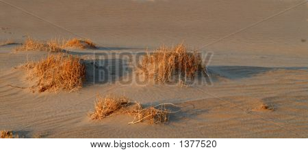Golden Colored Sagebrush In The Sand In Death Valley California