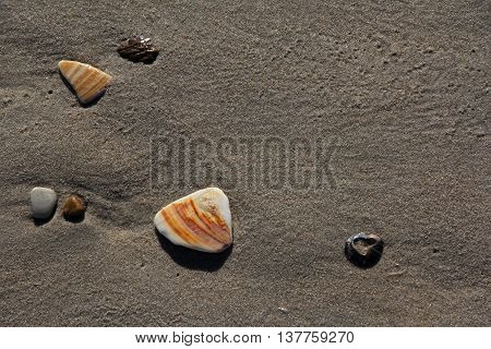 Wet North Carolina beach sand with shells, rocks, stones and a shell fragment with a heart shaped hole in it