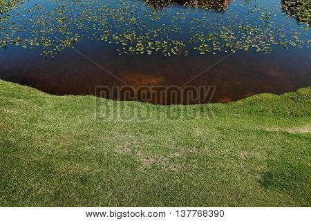 elevated view of lake shore and water lilies