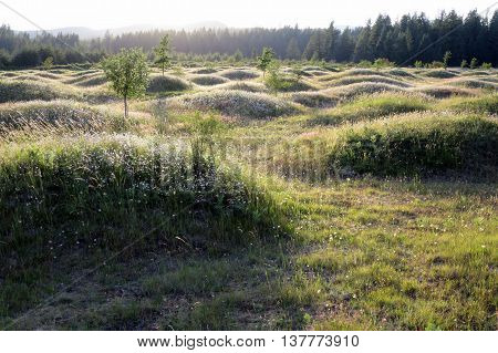 Mima Mounds in Washington State at Dusk