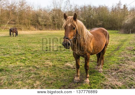 Brown Horse Stands On Green Grass