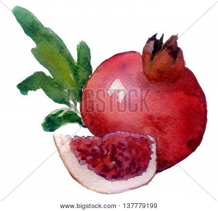 hand drawn watercolor painting fruit garnet on white background