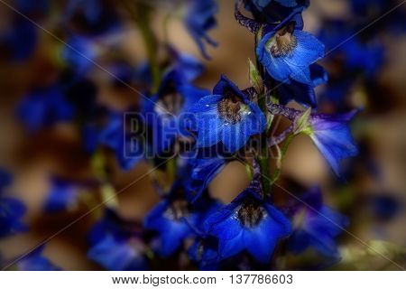 Beautiful floral background with bright blue wild flowers closeup on a dark blurred background